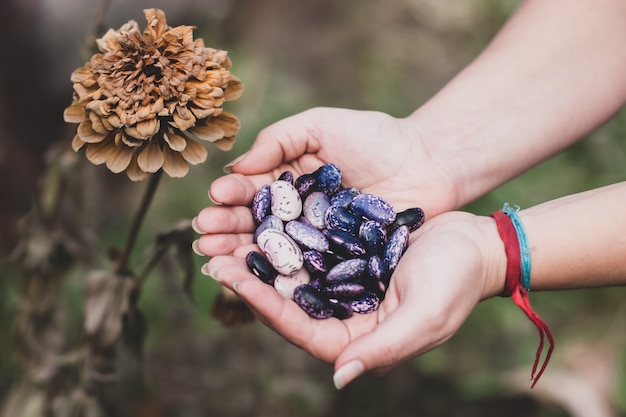 A garota tem grandes feijões coloridos nas palmas das mãos. flor de calêndula congelando das primeiras geadas noturnas de outono. família aster. tons silenciados. foco seletivo. o fundo está desfocado.