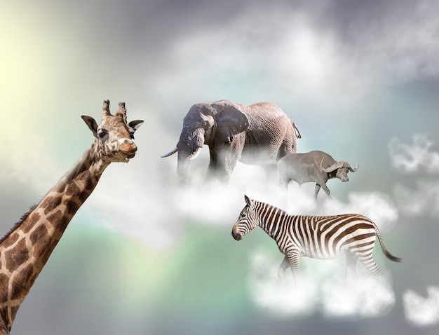 A girafa, a zebra-elefante acima de nuvens brancas na frente de um céu cinza