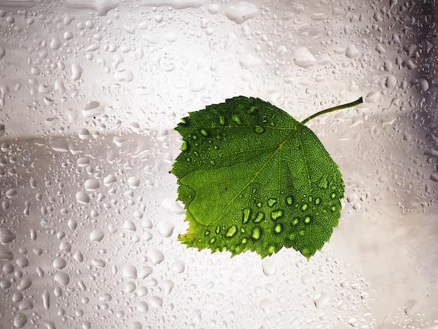 A gota verde da água da folha nas janelas de vidro molhou o ambiente da umidade. gota de água verde ambiente de umidade molhada, conceito de estação chuvosa fresca de natureza
