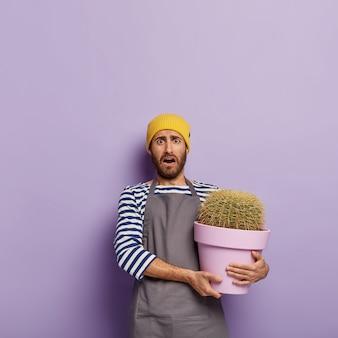 A governanta confusa cuida de um vaso de planta, segura um grande cacto em um recipiente roxo