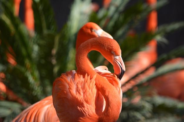 A graça e a beleza do flamingo