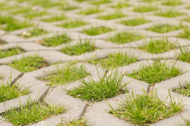 A grama cresce através de pedras de pavimentação, close-up