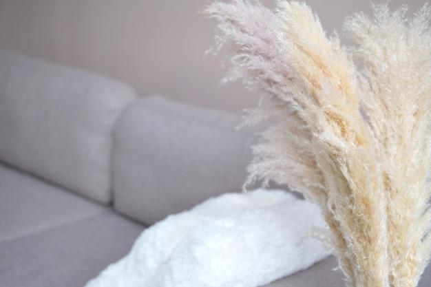 A grama dos pampas em um vaso de vidro vermelho fica no chão perto do sofá. cortaderia selloana. vista frontal. decoração da casa. foto
