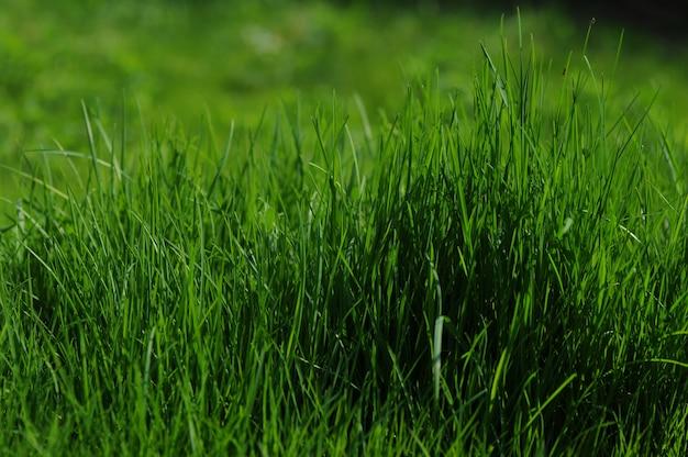 A grama é mais verde