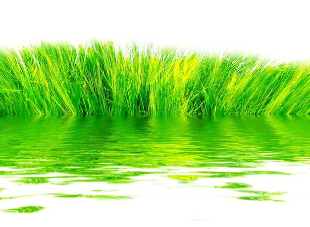 A grama fresca refletida na água