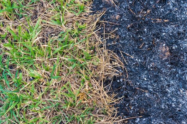 A grama pegou fogo, queimando grama.