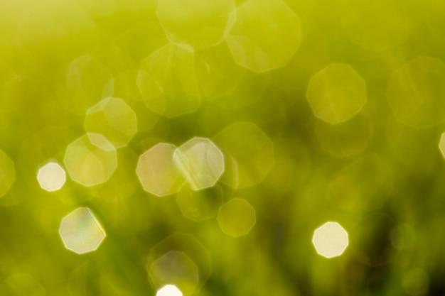 A grama verde iluminada pela luz do sol com gotas de orvalho ou chuva está fora de foco, o orvalho parece um reflexo em um fundo verde abstrato