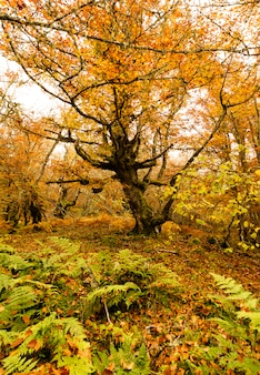 A grande árvore no outono park.