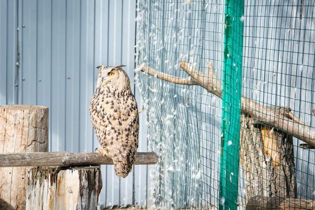 A grande coruja senta-se em um galho em uma gaiola no zoológico