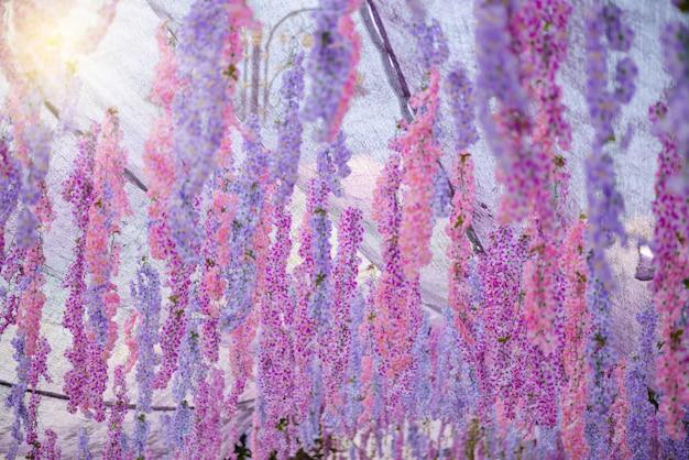 A grande flor das glicínias