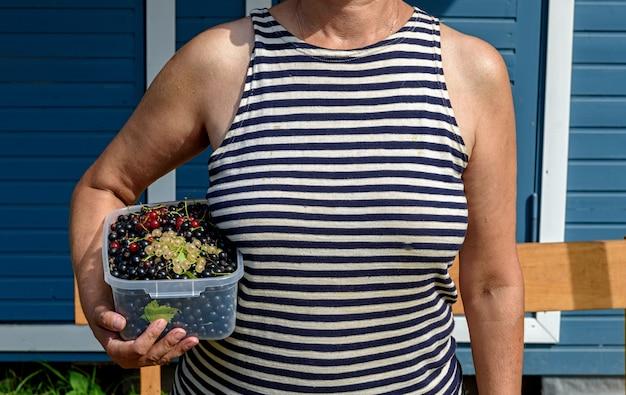 A groselha é coletada em um recipiente de plástico nas mãos de uma mulher, uma garota com um colete marinho. mistura de groselhas pretas, vermelhas e amarelas.