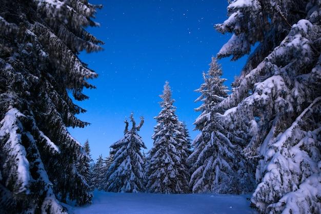 A hipnotizante paisagem noturna de pinheiros nevados crescem entre montes de neve