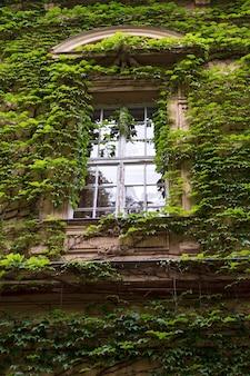 A imagem da janela de madeira velha na fachada da casa, que é completamente coberta de hera verde
