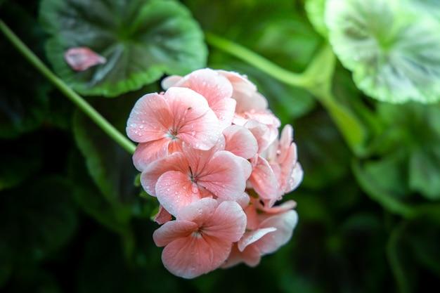 A imagem de fundo das flores coloridas