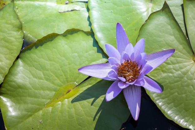 A imagem de fundo de flores coloridas