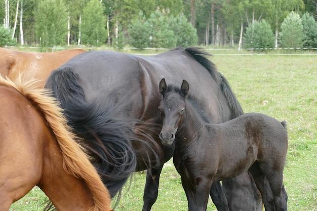 A imagem de um cavalo na floresta. composição natural.