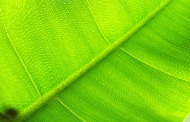 A imagem macro fechou a textura do verso da folha com gotas de água