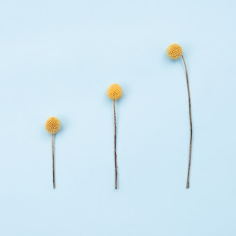 A imagem quadrada de três flores rústicas alaranjadas encontra-se na tabela. copie o espaço