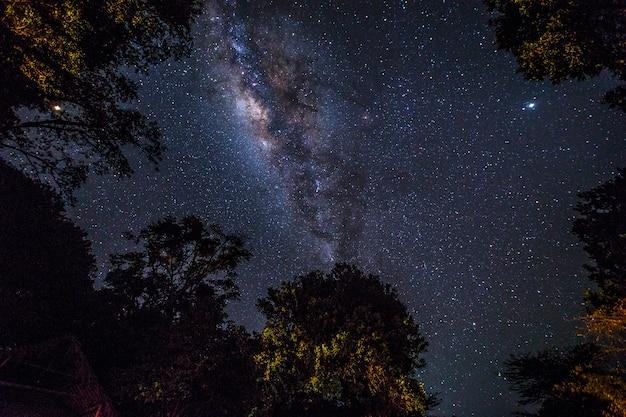 A impressionante via láctea e algumas árvores do parque nacional masai mara. quênia