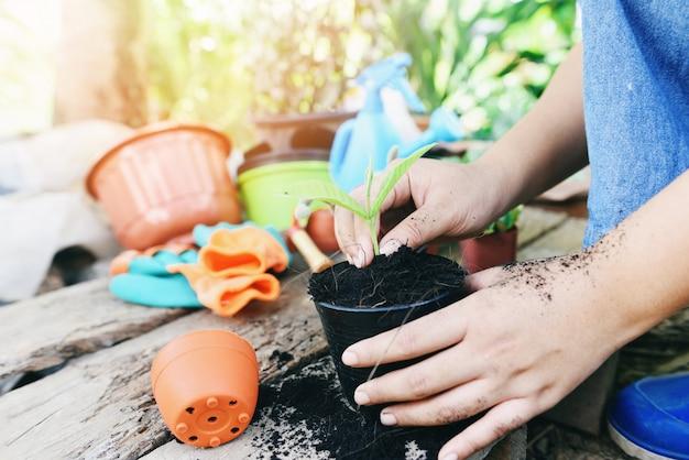 A jardinagem que planta uma planta nova das plântulas da árvore está crescendo no solo do potenciômetro com ajuda da mulher da mulher o ambiente.