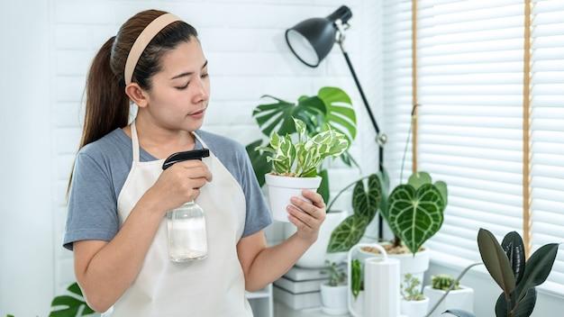 A jardineira asiática está segurando um vaso com uma planta e cuida das plantas, borrifando água fertilizante nas plantas da sala em casa enquanto está de pé para uma atividade de passatempo, conceito de horta doméstica