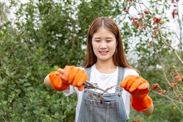 A jardineira feminina concebe um galho da amoreira sendo cortado com uma tesoura de poda por um jardineiro para dar forma à árvore inteira.