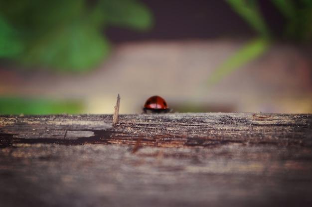 A joaninha está caminhando ao longo da velha prancha de madeira envelhecida, saindo em fundo verde, para papel de parede. conceito de foco suave. ladybug macro. borrado.