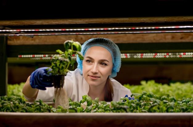A jovem cientista analisa e estuda pesquisas em plantações de vegetais orgânicos e hidropônicos.