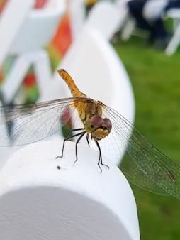 A libélula pertence à ordem odonata infraordem anisoptera