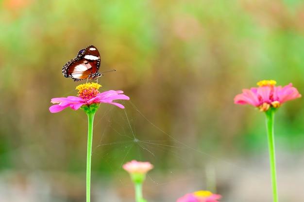 A linda borboleta sobre as flores no jardim.
