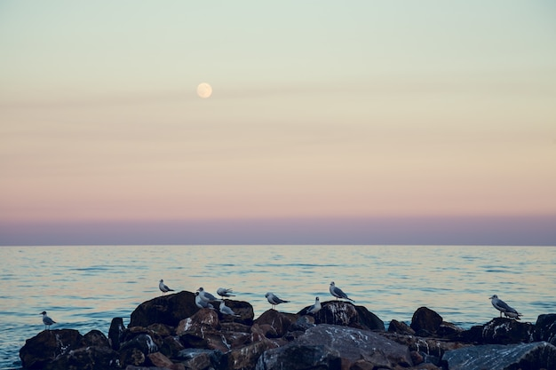 A lua ascendente contra o mar