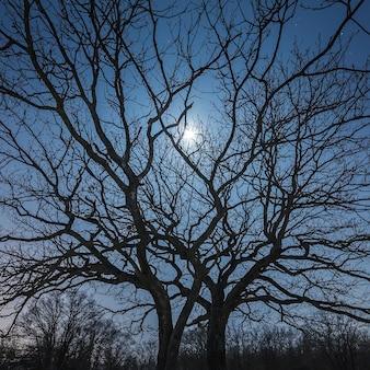 A lua brilha entre os galhos de uma árvore contra o céu estrelado da noite no inverno.