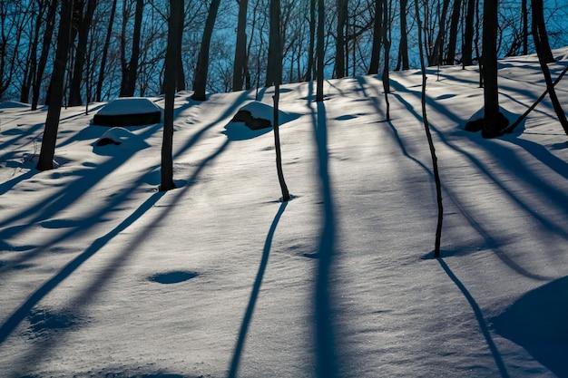 A luz da noite na neve entre as cepas das árvores em formas abstratas do período de inverno