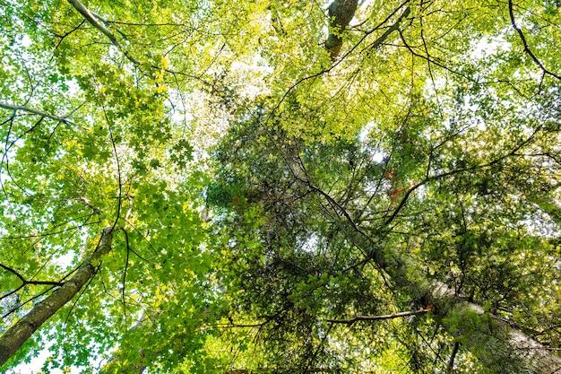 A luz do sol atravessa a floresta verde dia ensolarado.