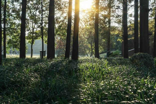 A luz do sol atravessa a floresta