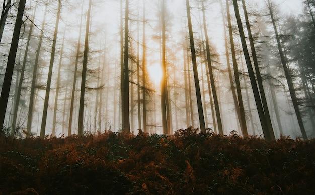 A luz do sol brilhando através da floresta enevoada