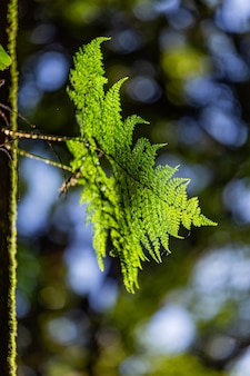 A luz e a sombra da floresta tropical em doi inthanon, chiang mai, tailândia