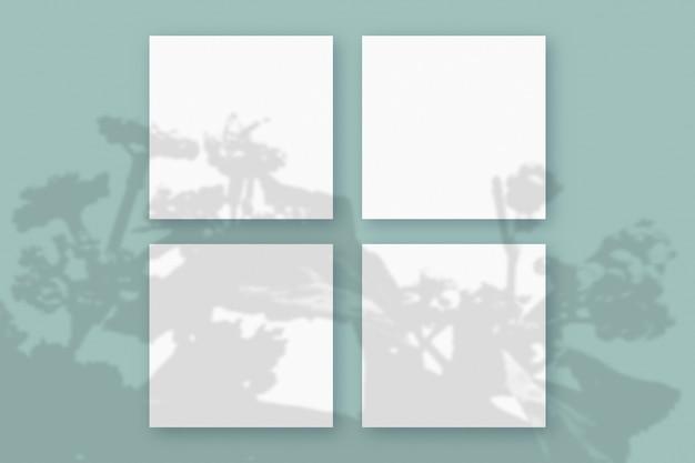 A luz natural projeta sombras da planta em 4 folhas quadradas de papel branco sobre um fundo verde texturizado. brincar