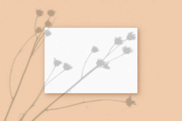 A luz natural projeta sombras da planta em uma folha retangular de papel a4 texturizado branco sobre um fundo bege texturizado