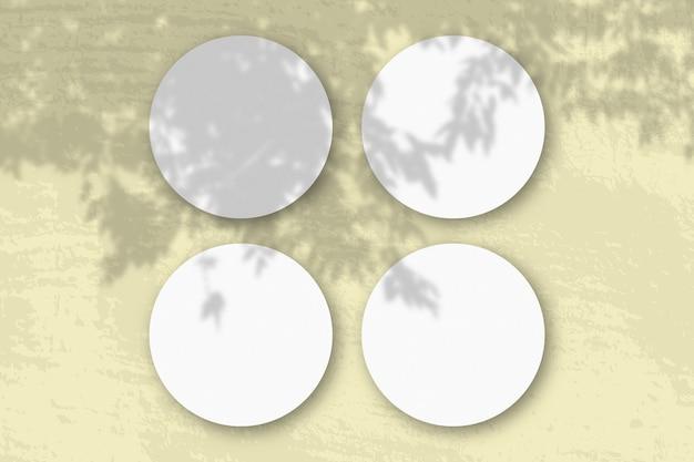 A luz natural projeta sombras de um galho de macieira em folhas redondas de papel texturizado branco