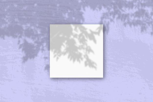 A luz natural projeta sombras de um galho de macieira em um lençol quadrado
