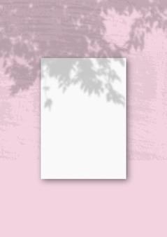 A luz natural projeta sombras de um ramo da apple na vertical uma folha de papel texturizado branco