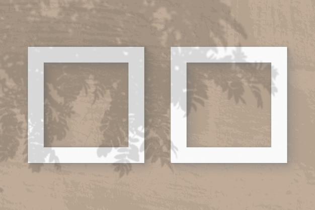A luz natural projeta sombras do ramo de rowan em 2 molduras quadradas de papel texturizado branco