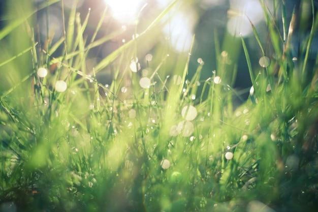A luz solar através da grama