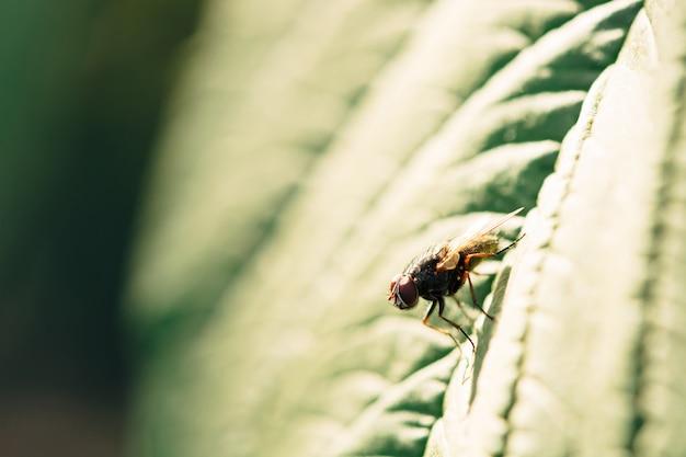 A luz solar cai em uma mosca que se senta em uma folha verde.