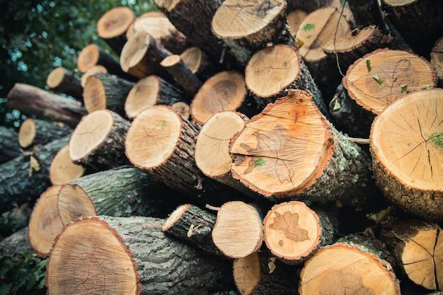 A madeira colhida no inverno. close-up de registros.
