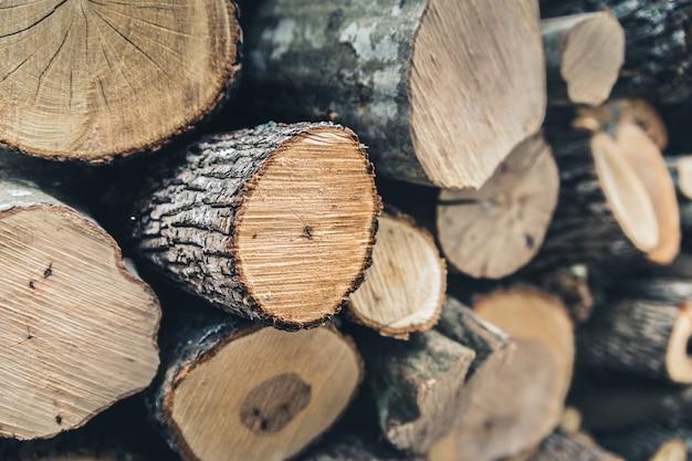 A madeira colhida no inverno