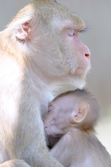 A mãe macaco e filho abraço