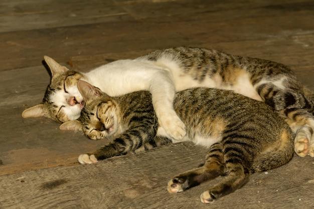 A mamãe gato abraçou um gatinho enquanto dormia no chão de madeira, parecendo fofa.