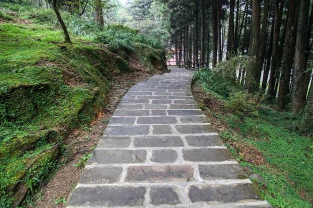A maneira da caminhada na área do parque nacional de alishan em taiwan.
